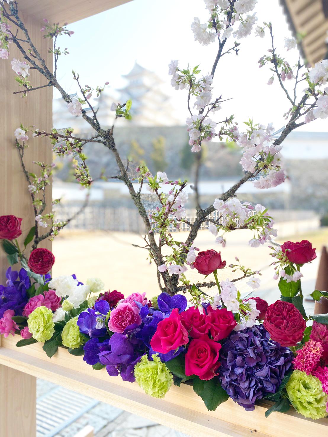 桜咲く世界文化遺産・国宝姫路城「一足早いお花見気分を」