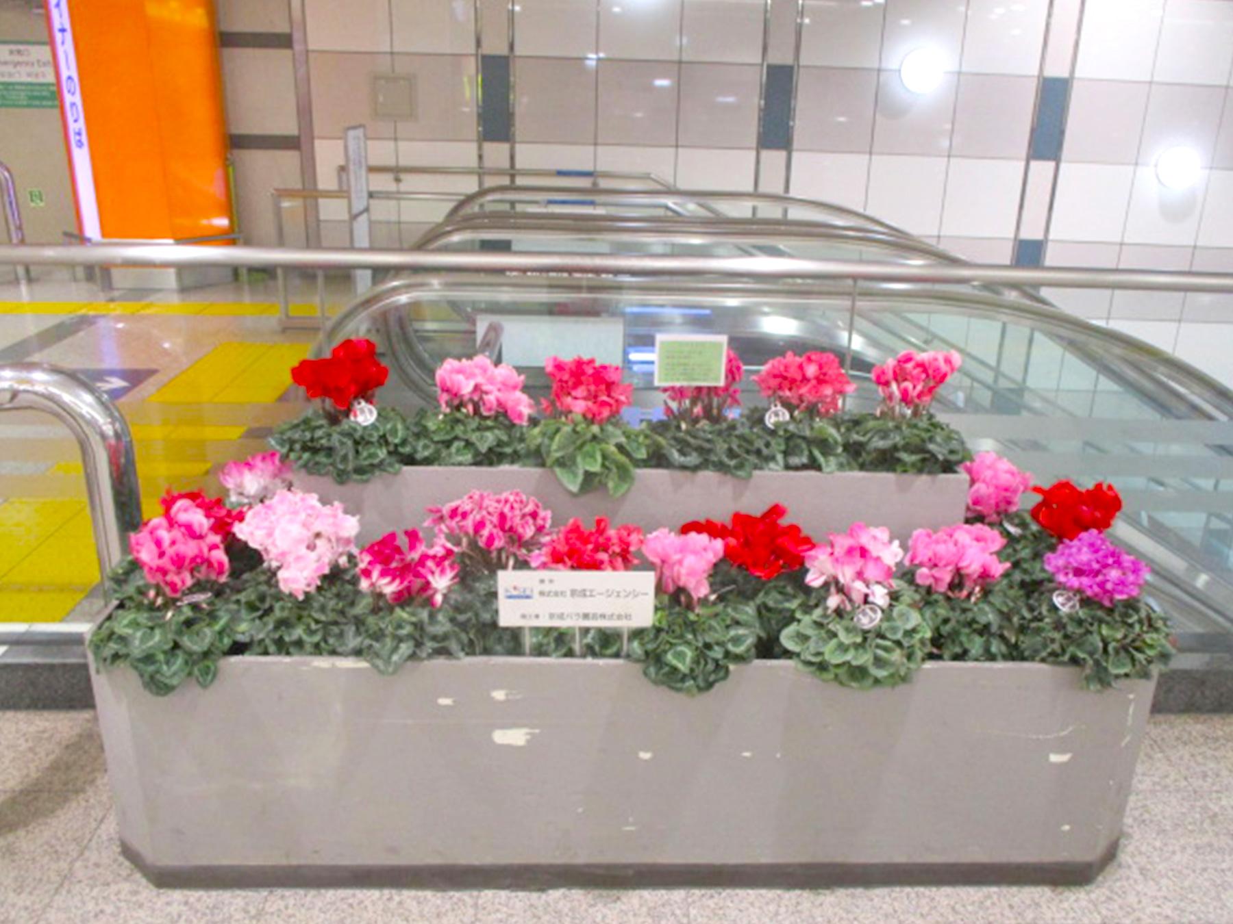 京成バラ園、京成電鉄線の駅にバラを設置