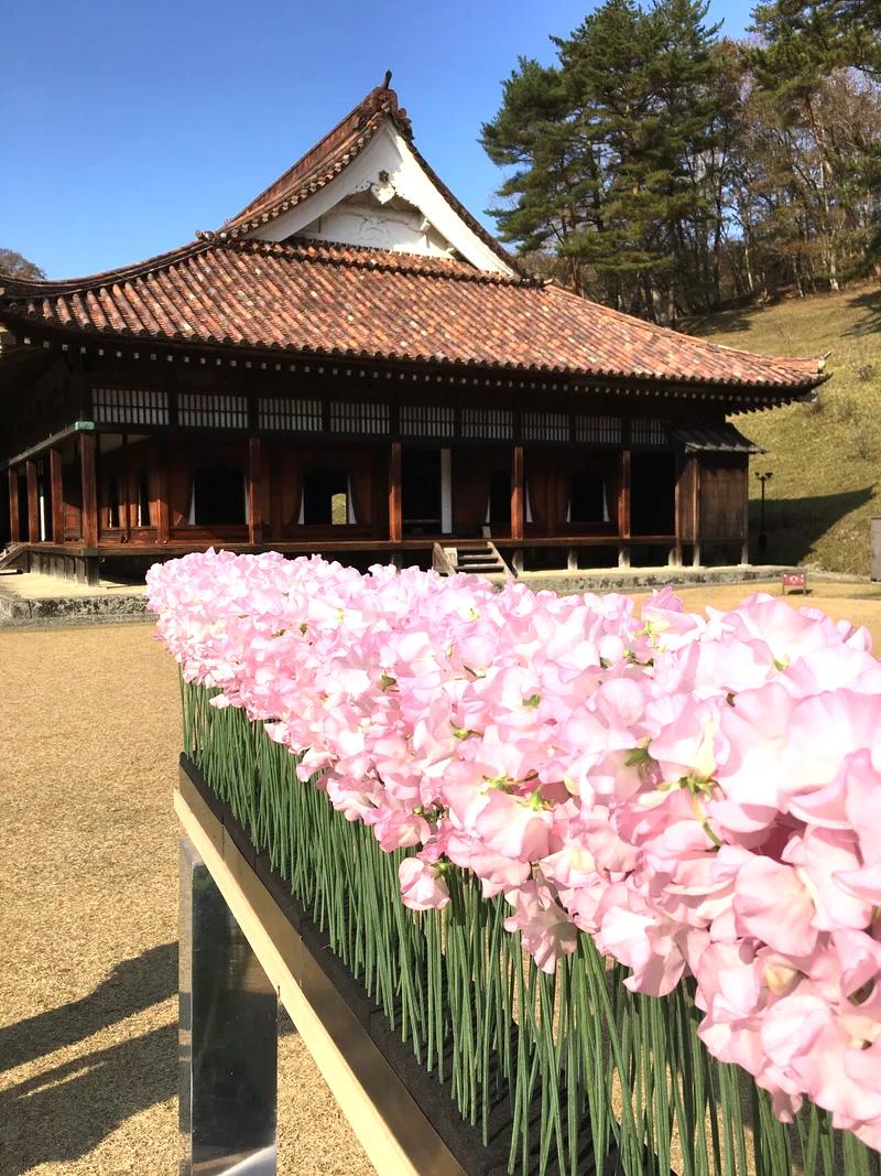 岡山県の閑谷学校で行われたフラワーロスイベント「温故知新」