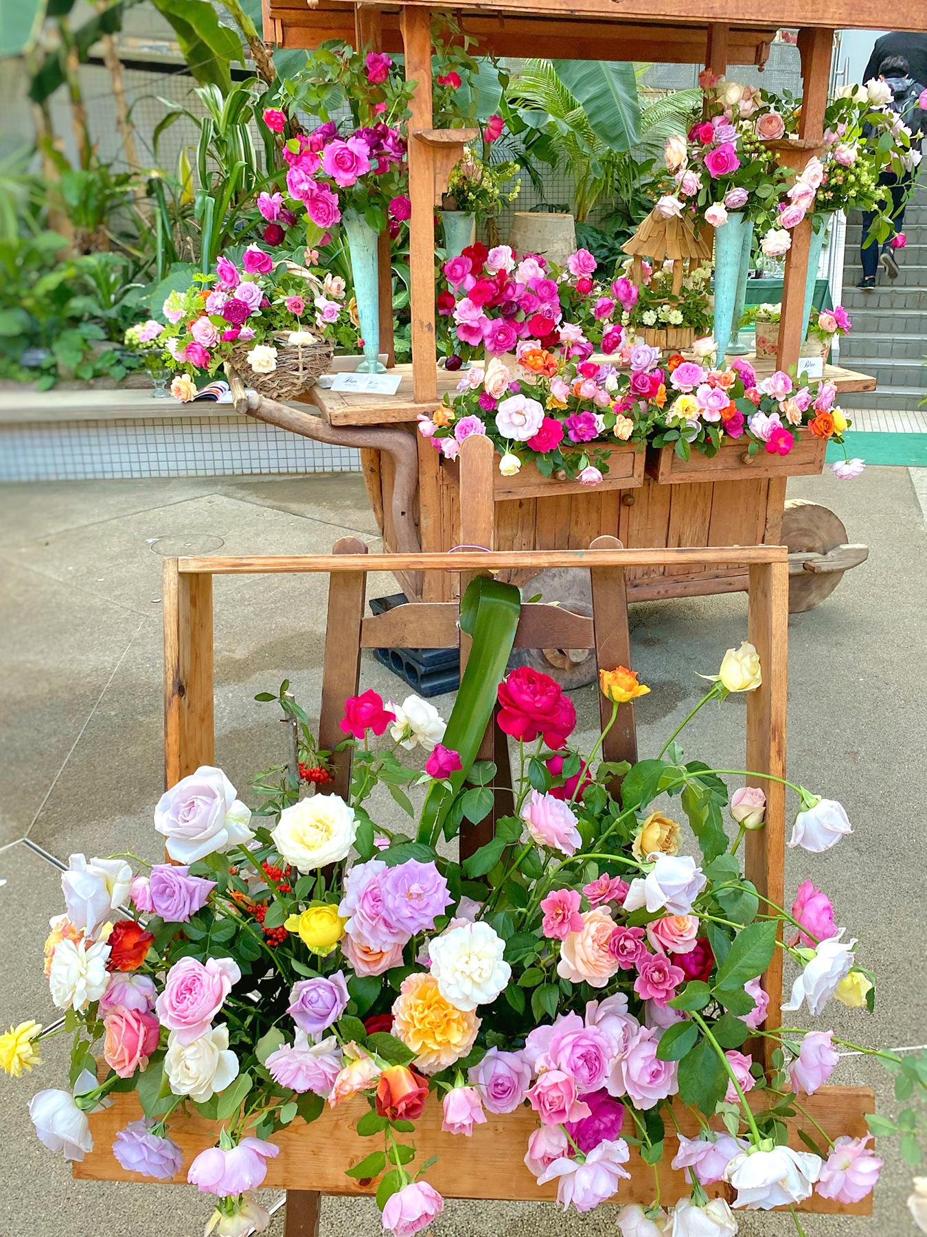 大阪・咲くやこの花館、香りのばらの祭典「秋のばら祭」